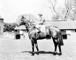 Brigadier Gerard with Joe Mercer (b607-01a)
